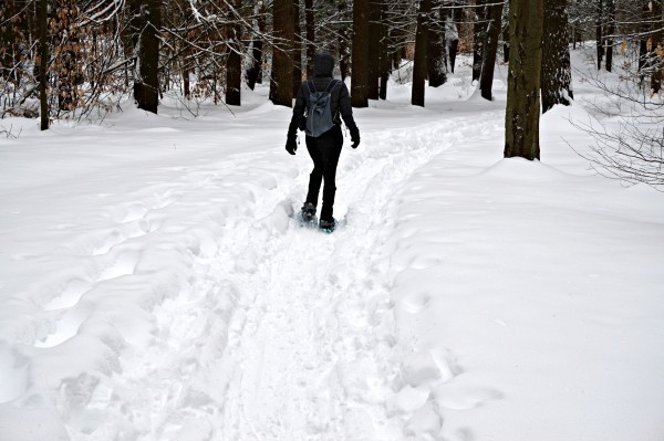 Snowshoeing in Newburyport's Maudslay State Park