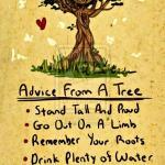 Lời khuyên từ một cái cây