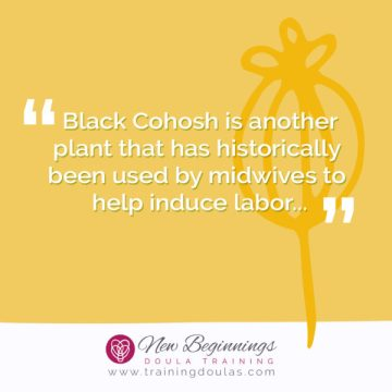 Natural Induction Methods: Black Cohosh to Induce Labor