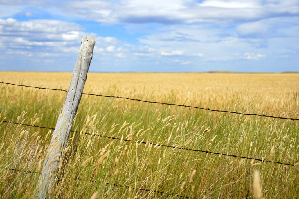 A weather-beaten fence in the middle of nowhere Montana, wheat fields and sky stretching for miles.