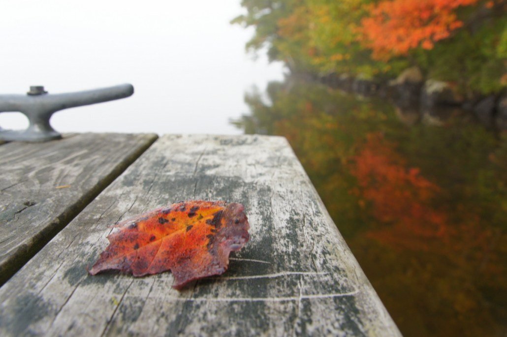 A fallen leaf on the corner of an old, scratched dock.