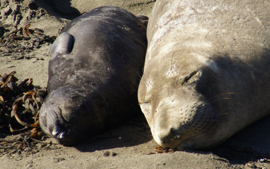 Mom and brand new baby slumbering in the sand.