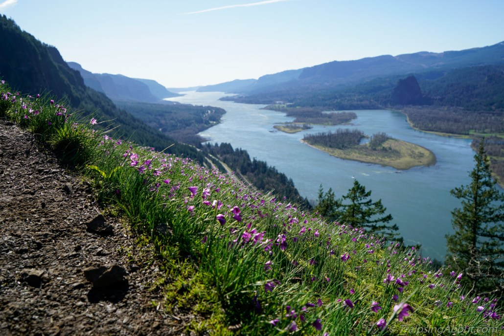 Spring flowers in the Columbia Gorge looking west toward Portland.