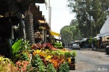 Turismo Xochimilco artesanias flores (9)