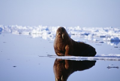 TRANSCEND MEDIA SERVICE » Greenland: How Rapid Climate ...