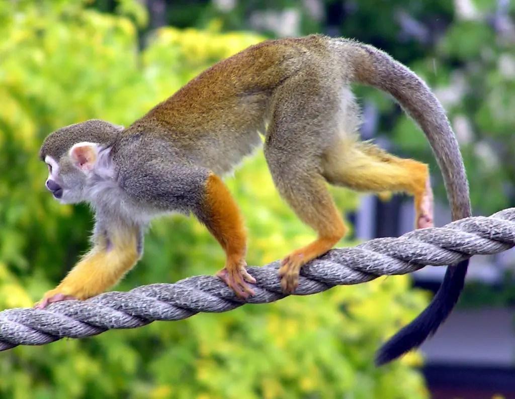 climbing monkey,rock climbing benefits