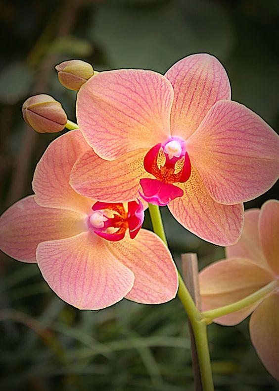 cuidar-de-orquideas-20