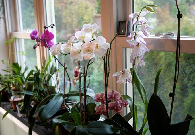 A ventilação adequada para sua orquídea
