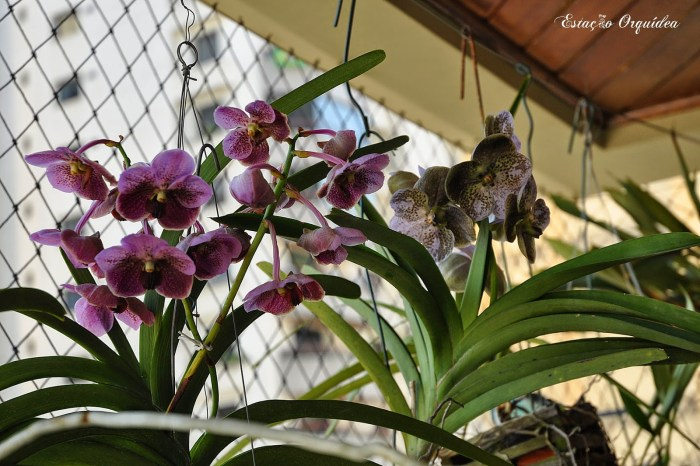 Cuidados com as orquídeas em andares altos