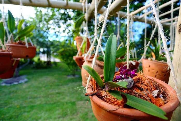 A umidade certa para a sua orquídea