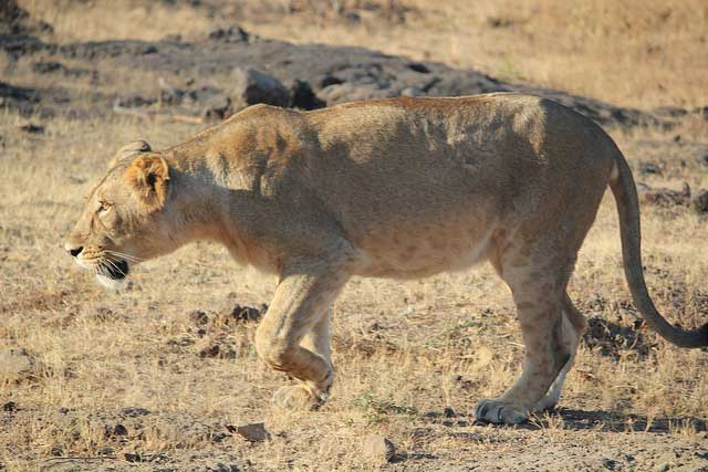 Sasan Gir National Park