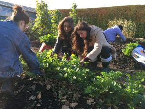Kernel Community Garden Session @ THe Kernel, St Andrews Botanic Garden