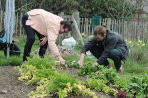 Thursday at Albany Park @ Albany Park Community Garden