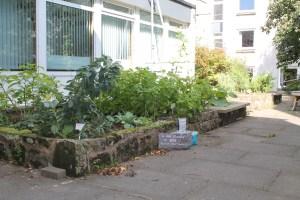 Gardening at Gannochy @ Gannochy Quad