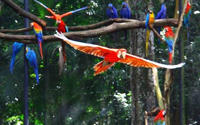 Arara vermelha no Parque das Aves em Foz do Iguaçu