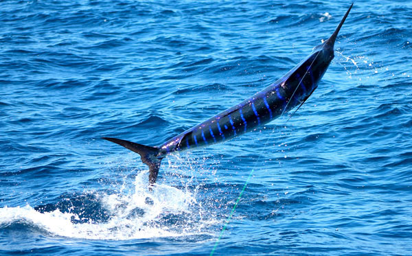 Fishing Charters and Day Trips