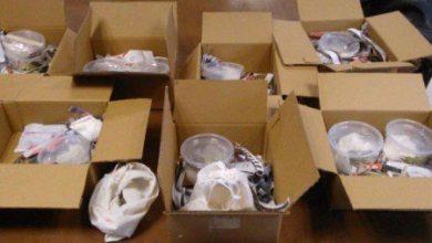 Photo of Asegura Profepa 31 reptiles enviados ilegalmente por paquetería