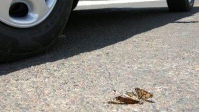 Photo of Caminos donde pasa la monarca tendrán límite de 60 km/h