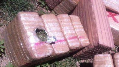 Photo of Tráiler con 25 toneladas de mariguana se vuelca en Huatabampo