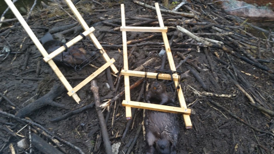 Andrew Dean from Ontario has a nice setup for beaver trapping with 330 conibears. Quick, simple setup and no wire needed!