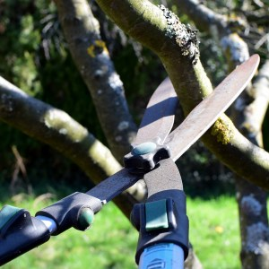 Pruning and Trimming Tools