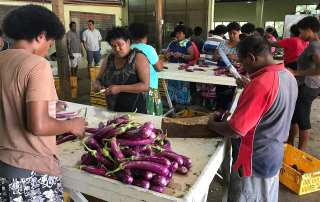 Understanding the agriculture value chain in Fiji