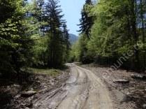 drumul-forestier-ursoaia
