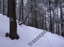 piscul-serbota-iarna