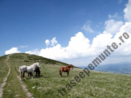 Cai pe munte