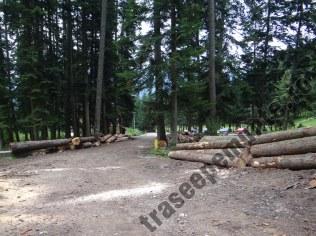 Valea Urlatorii_copaci taiati