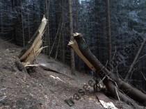 Copac rupt in padure