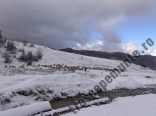 Valea Sipoaia_stana