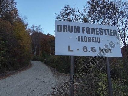 Drumul Forestier Floreiu