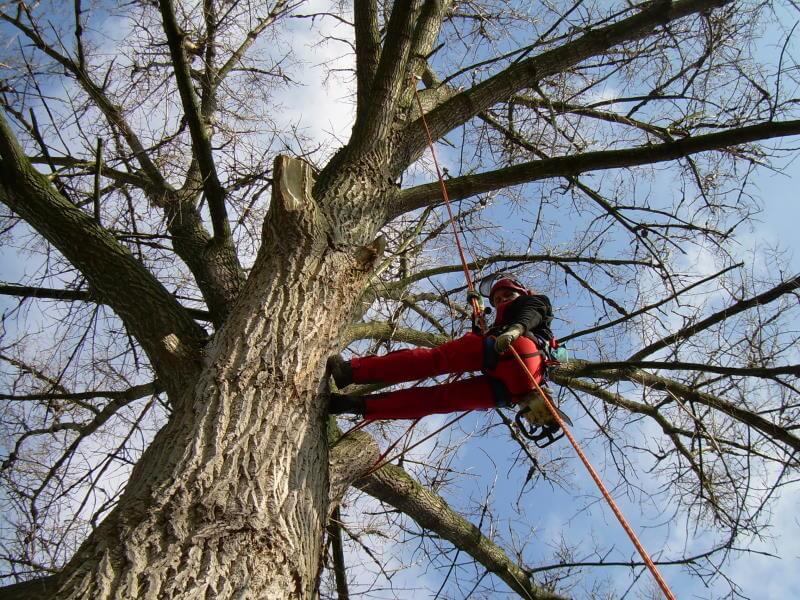 Baumschnitt und Gehölzpflege