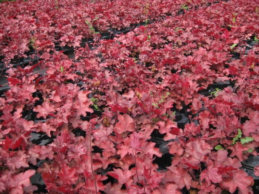 Blattfarben im Garten