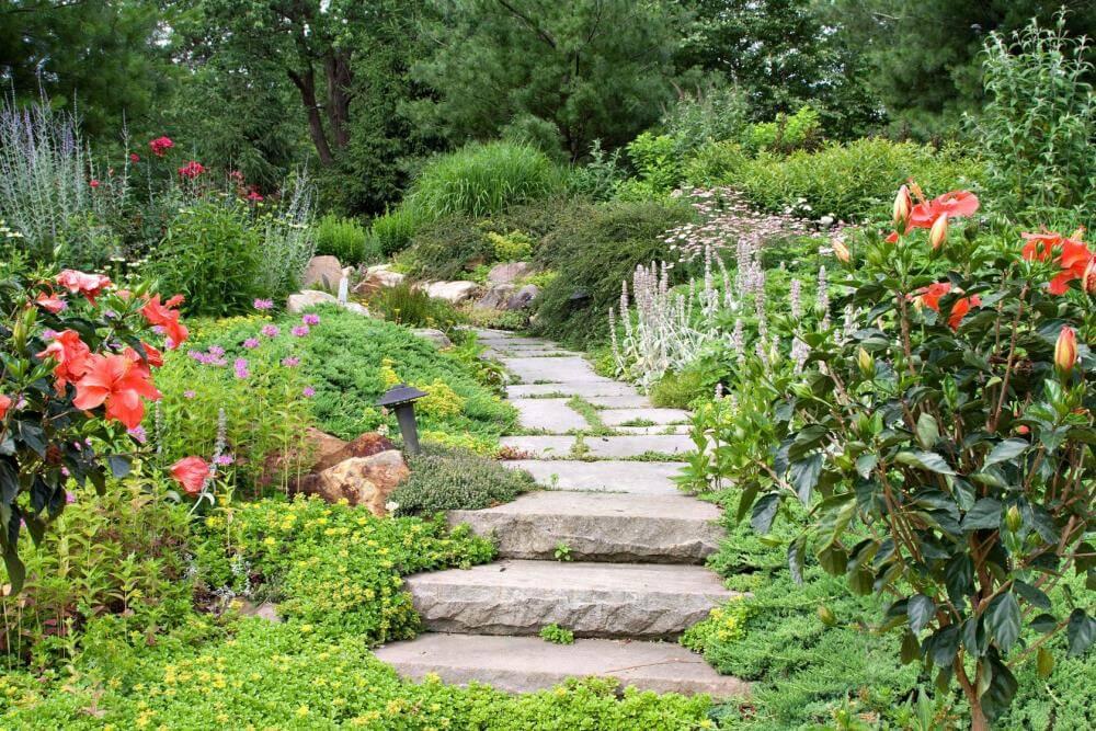Pflanzengemeinschaft im Garten