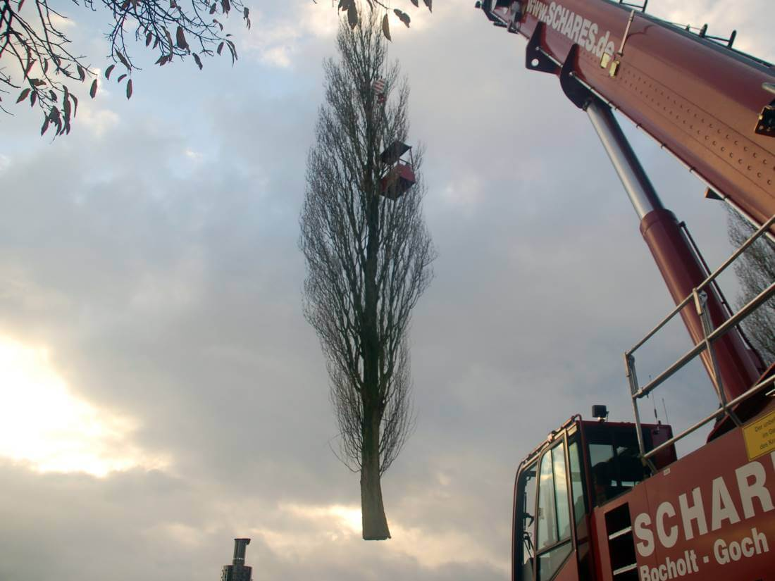 Baumfällung Kleve