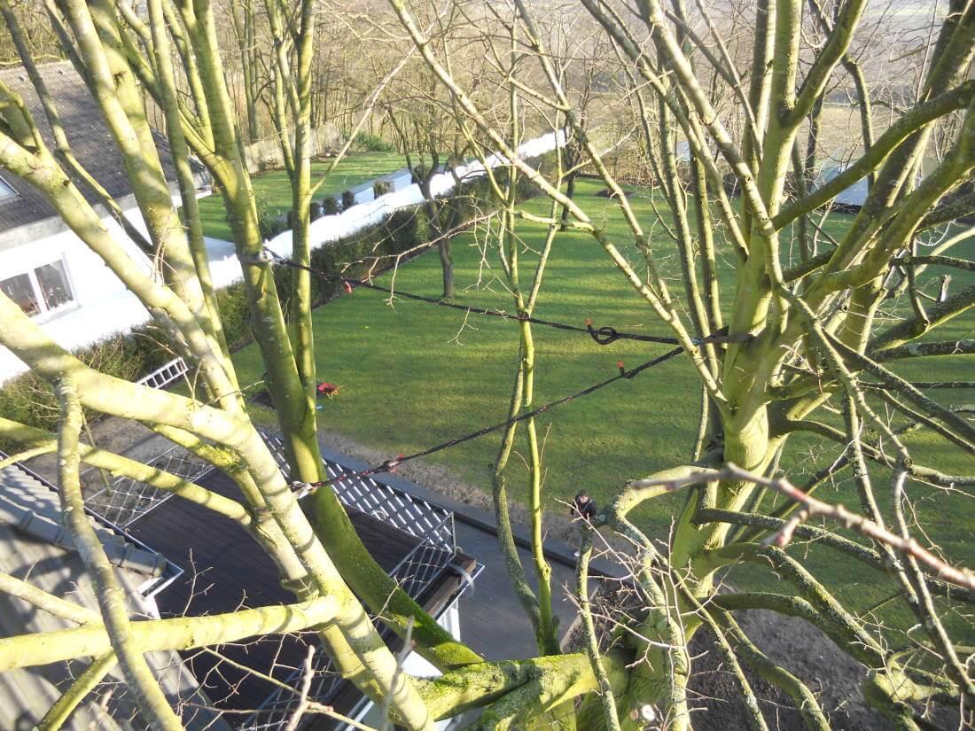 Kronensicherung Bäume