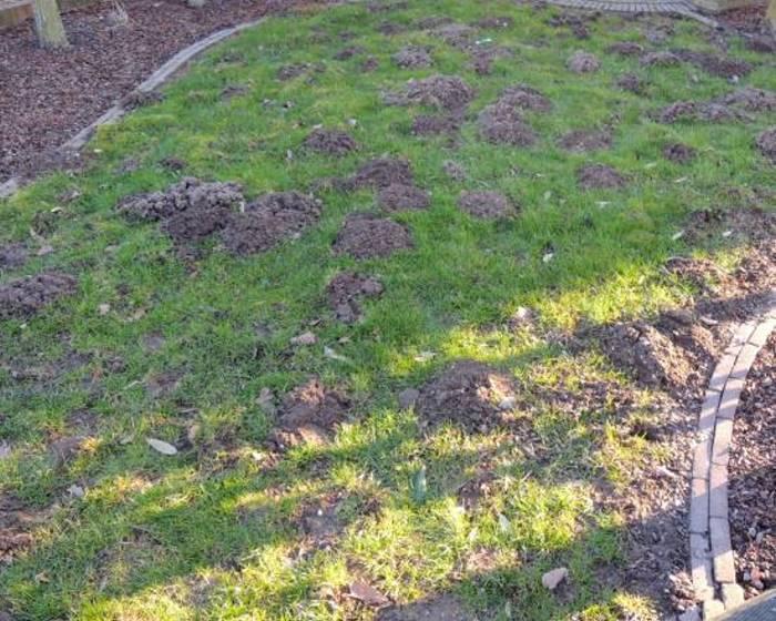Maulwurfschutz im Rasen