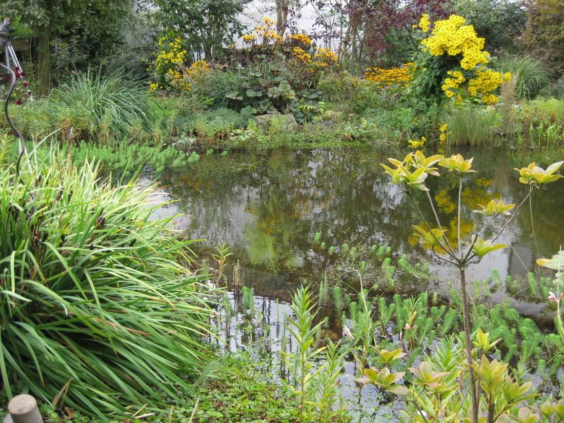 naturnaher Garten gestalten