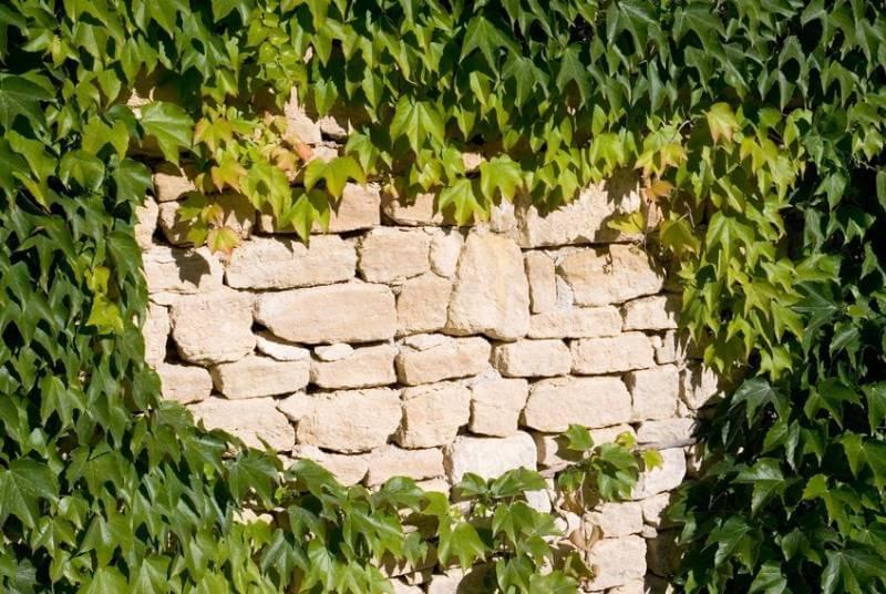 bilder zu gartenmauern – actof, Gartenarbeit ideen