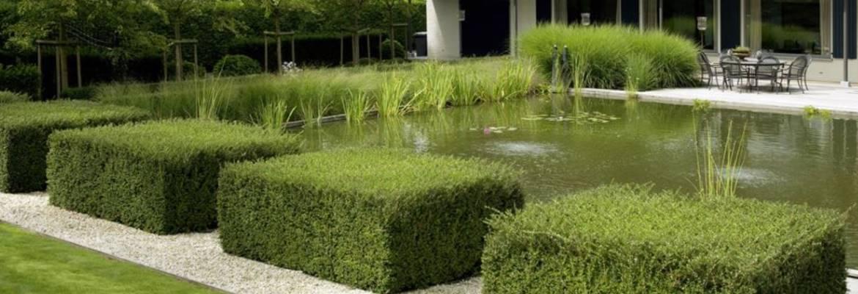 puristischer Garten