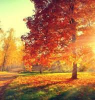 Pflanzarbeiten im Herbst