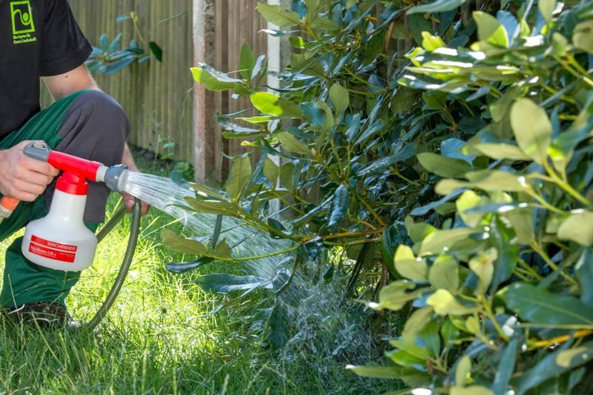 Dickmaulrüssler Bekämpfung Nematoden