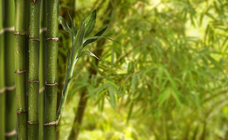 S Travaux Exterieurs Jardin Paysagisme Prix Haie Bambous