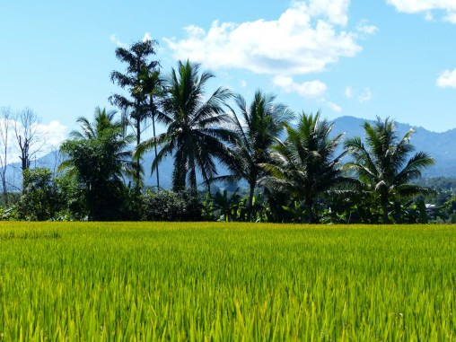 Fields and palms
