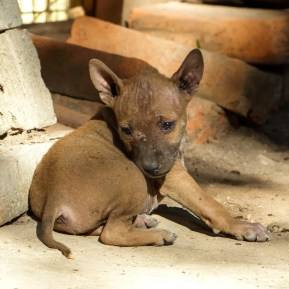 Puppy in Mawlamyine