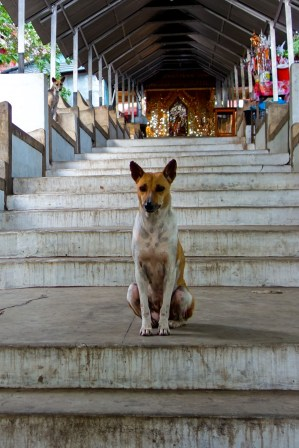 Mandalay hill - Serious Guardian Dog Christian Jansen & Maria Düerkop