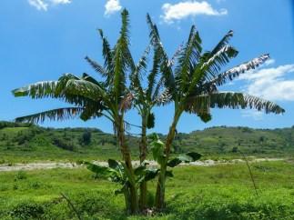 Sumba - palm trees in green valley Christian Jansen & Maria Düerkop