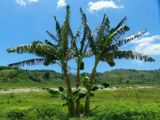 Sumba - palm trees in green valley Christian Jansen & Maria Düerkop